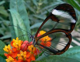 Beautiful Butterfly by Avalon179