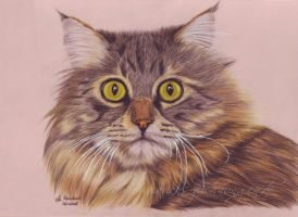 Maine Coon by WitchiArt