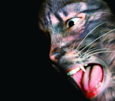 Chat Sauvage - Wild Cat by bdec