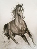Another Horse by RancidNirvana