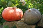 Pumpkins 05 by CD-STOCK by CD-STOCK