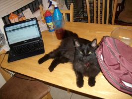 Kitty on my working space by Vetom