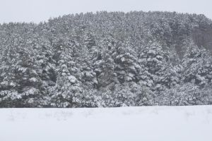 Snow Scape 5 by Ardenstock