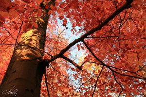 UNDER THE RED TREES VI by wenr