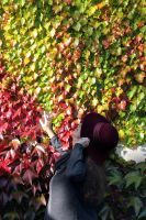 Fall Leaves Are Smilling by aegiandyad
