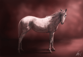 Appaloosa: Othello by stalit