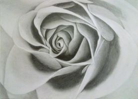 Drawing of a Rose by VisualArt93