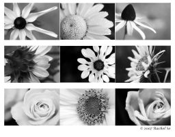 3x3 BW Flowers Framed Mock Up by butterfly36rs