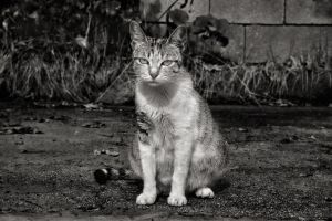 The cat in black and white by g4l4d4n