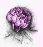 peony by DariaGALLERY
