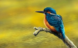 Kingfisher by CaymArtworks