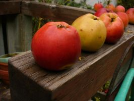 Fall - Apples 1 by Psychic-Keraina