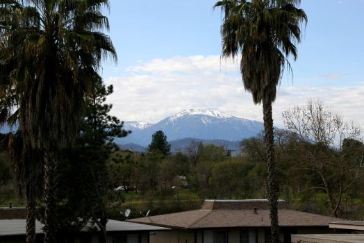 Palms and snowy mountain tops by rodrev