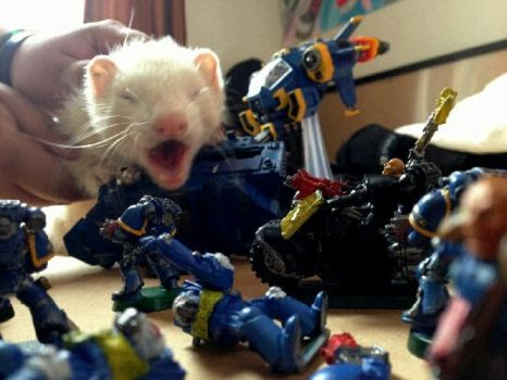 Ferret attacks. by HelloKittyNya