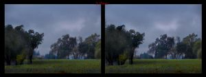 Cross view 3D Cold Day in the Napa Valley Vineyard by shawnrl61
