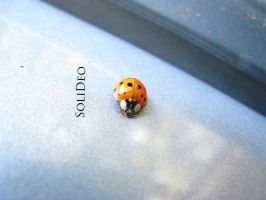 Ladybug by SoliDeo