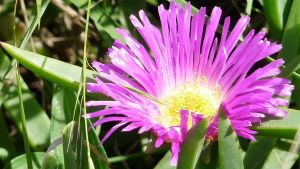 Purple Flower by NaturalBeauty-Photos