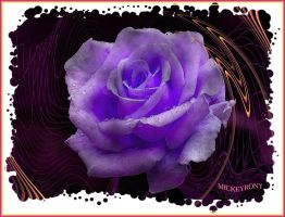Purple rose by mickeyrony