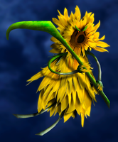 Sunflower Reaper by Zakfuego