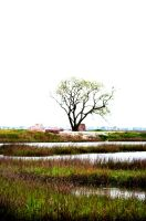 Ruler of the Marsh by KevinMcNeff