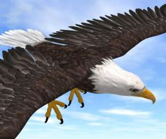3D eagle by tesherr