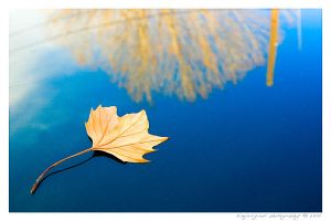 floating leaf by bimjo