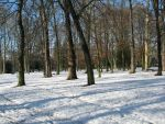 Place 271 - forest under snow by Momotte2stocks