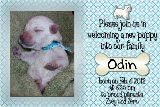 Birth Announcement: Odin by spookyspinster