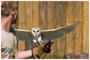 Barn Owl - Touch Down by W0LLE