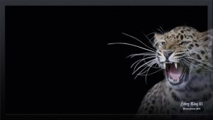 Leopard Desktop Animals 1920 x 1080 by FABRYKING61