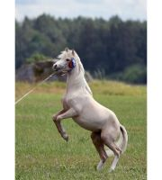 Zirkus-Boy by LovLus