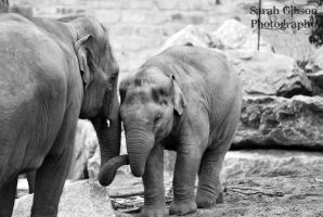 Mother Elephant and Baby by Sarahmon