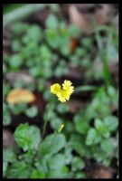 young yellow by conai