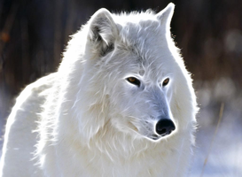 White Wolf fractalius by JayC79