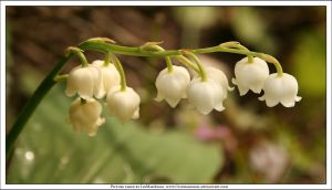 Lily of the Valley by LinMadAngel
