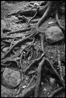 Roots by grimleyfiendish