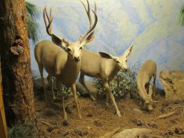 Taxidermy 5 by chamberstock