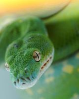 Greent Tree Python 2 by ryanmattes