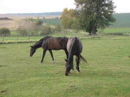 Horses by Andenne
