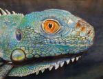 Iguana Portrait by nudge1