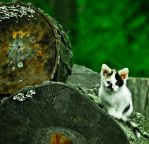 Cat on Log by The-Prez