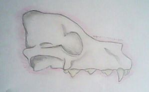 anatomy pratice-skull by groverismypuppy