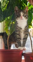 Oscar in the jungle by Yerahatte
