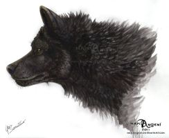 Black Wolf by makangeni