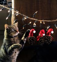 my cat and christmas ornaments - 2 by Pokakulka