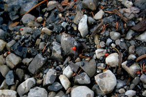 Lady bugs in the sand by MikeyDearest