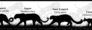 'Big Cat Rescue' (BCR) banner by NinjaKato