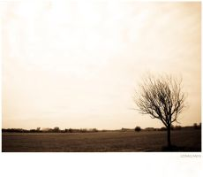 loneliness by reb70