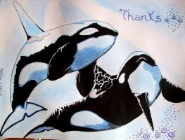 Orcinus orca thanks by Orca8