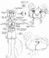 Anatomy of Rigel by Cane-McKeyton